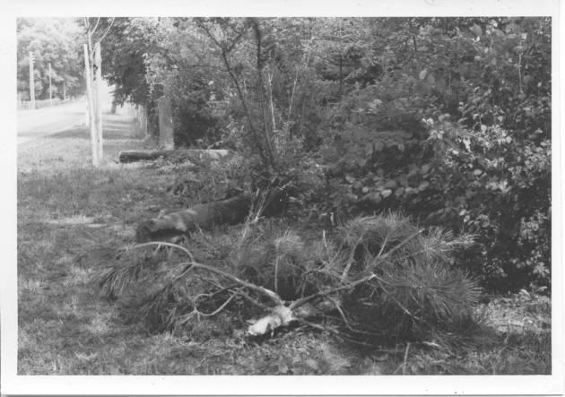 Påkørsel af hegnet ved nr 8 i 1982